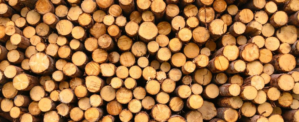 EUTR Europos Sąjungos medienos reglamentas