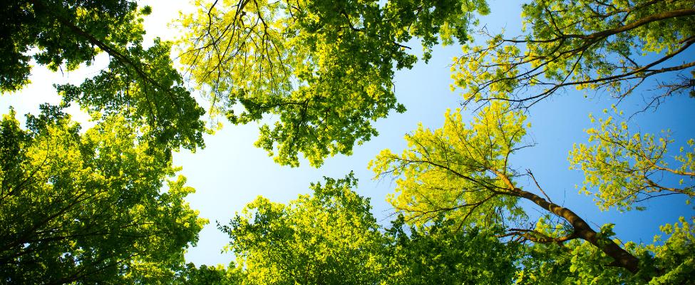 FSC<sup>®</sup>medienos tiekimo grandinės sertifikavimas