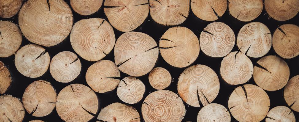 PEFC Miškų tvarkymo sertifikavimas