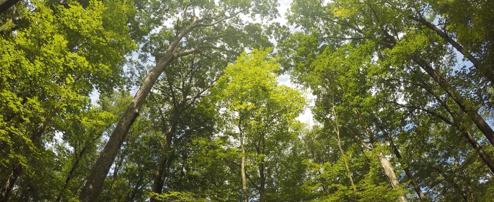 FSC<sup>®</sup> miškų tvarkymo sertifikatas
